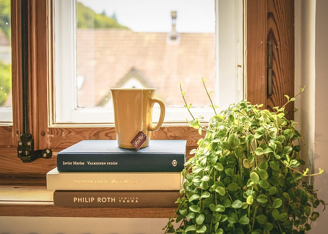 jemná rostlina na okně