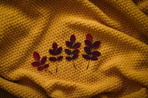 pexels-photo-3038601